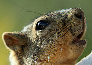 The Scoop: Santa Monica Squirrels Get Birth Controlled