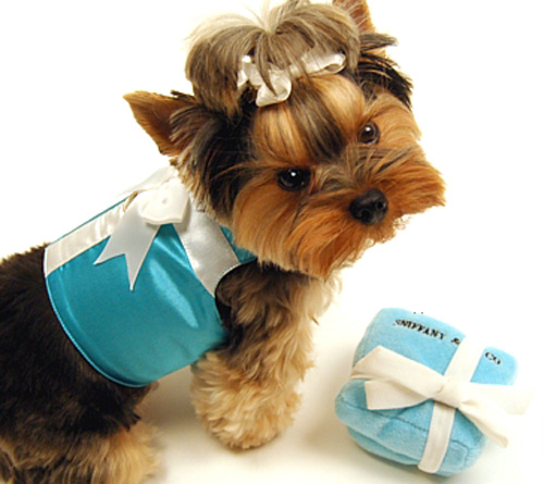 Tiffany's, Sniffany's – Your Pup Deserves It All!