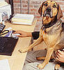 Is Your Office Celebrating Take Your Dog to Work Day?