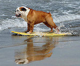 Surf's Up, Dogs!