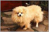 Sharon Osbourne's Pomeranian, Minnie, Dies