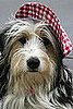 J&#039;Aime Les Chiens . . . Do You Love Dogs, Too?