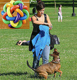Lily Allen Plays Fetch on Primrose Hill With Her New Dog, Mable