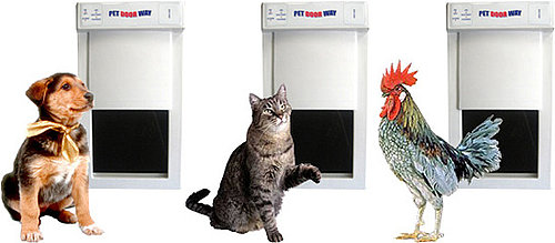 Does Your Dog or Cat (or Chicken) Need a Pet Doorway?