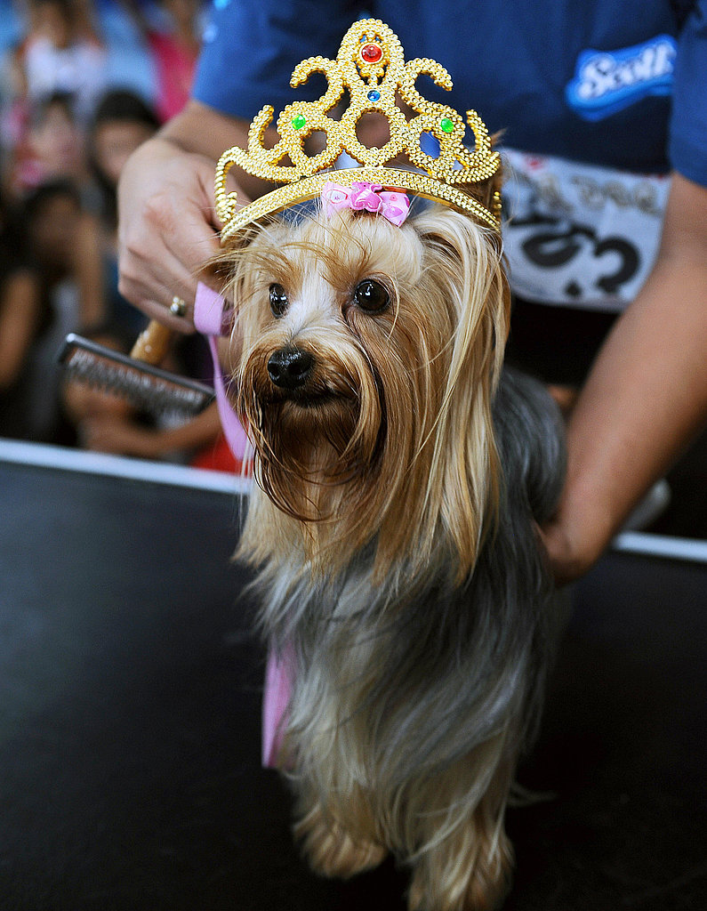 Who's Crowned Miss Canine Costa Rica?