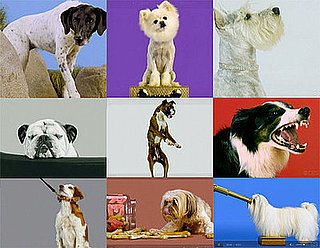 Greatest American Dog: Which Dog Expression Was Best?