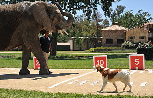 Greatest American Dog Recap: My Dog Can Fly!