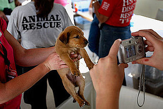 How You Can Help Furry Victims of Hurricane Ike . . .