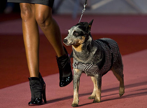 In the Spotlight: Cani di Lusso Pet Fashion Show in Mexico City