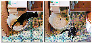 Upgrade Your CatGenie with the Power Flush System for Free!