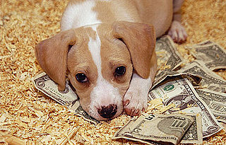 Do Tell: Are the Current Economic Crises Affecting Your Pets?