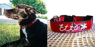Pampered Pals: One-of-a-Kind Embroidered Collars