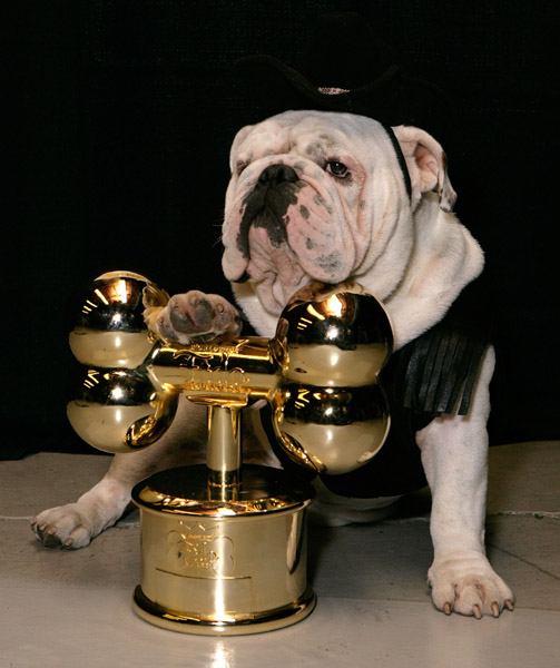Worldwide Fido Awards!