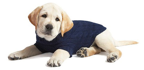 Trend Setters: Crewmutts Get True Blue For Fall