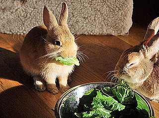 Do Tell: What Fresh Fruits or Veggies Do You Give Your Pets?