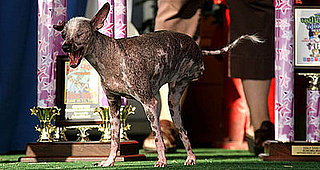 Breaking News: 2008 World's Ugliest Dog Loses Cancer Battle