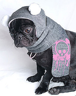 Pink Skulls on This Pretty Pug's Head: In the LINK of an Eye!