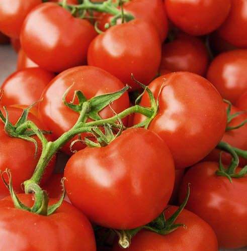 Tomato Growers Seek Payback For Salmonella