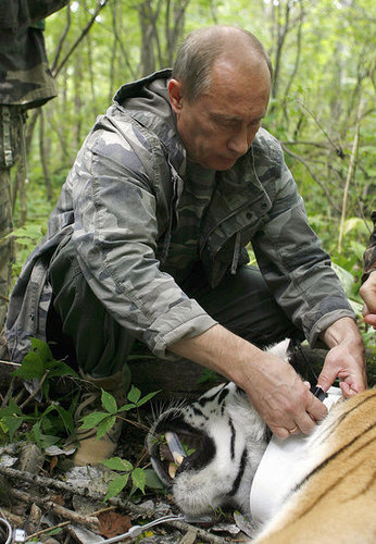 Putin Tranquilizes Tiger, Not Concerned About Tranquilizing EU