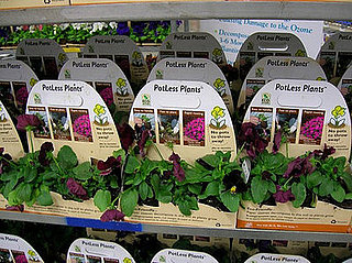 Cool Idea:  Potless Plants