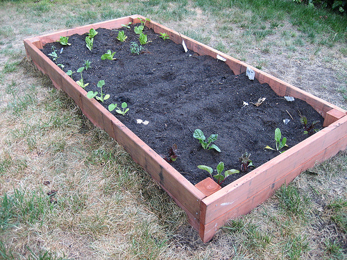 DIY:  Planting Your Garden Box