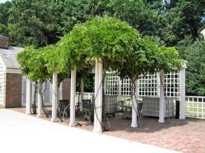 Wisteria covers a poolside dining room.