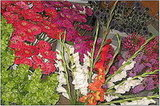 Buy Flowers From a Local Grower