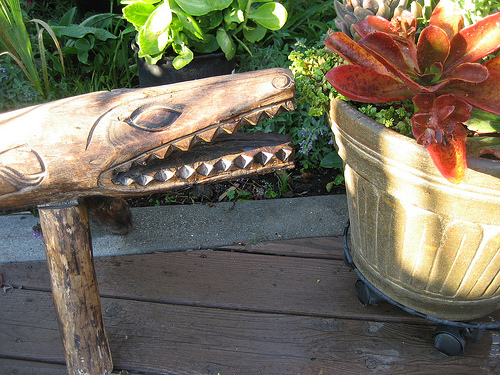 This alligator bench seems to be carrying on a conversation with this pot of succulents.