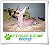 Pet Pics on PetSugar 2009-02-06 09:30:37