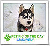 Pet Pics on PetSugar 2009-02-09 09:30:11
