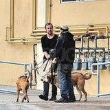 Ryan Gosling Walking His Dog