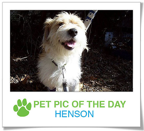 Pet Pics on PetSugar 2009-03-05 09:30:50