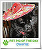 Pet Pics on PetSugar 2009-03-23 09:30:14