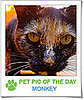 Pet Pics on PetSugar 2009-03-17 09:30:00