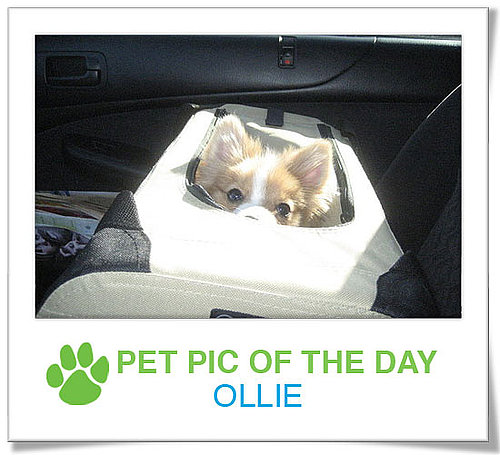 Pet Pics on PetSugar 2009-03-24 09:30:36