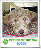 Pet Pics on PetSugar 2009-03-26 09:30:48