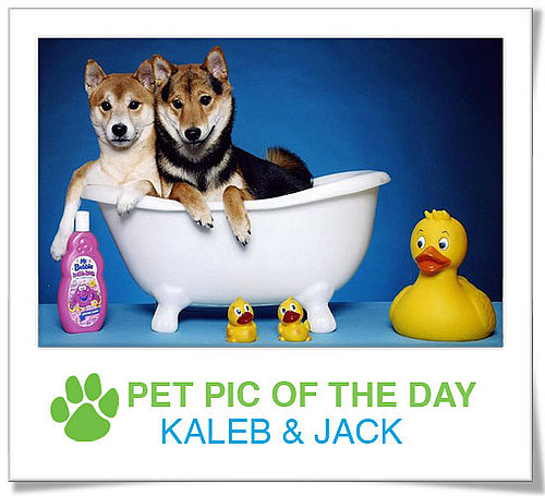 Pet Pics on PetSugar 2009-04-03 09:30:00