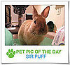 Pet Pics on PetSugar 2009-04-14 09:00:26