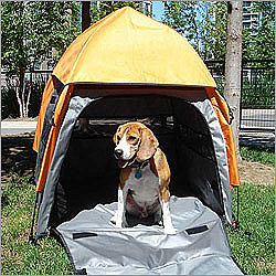Umbra Tent Pet House ($125)