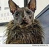 Ugly Bat Boy the Ugly Cat