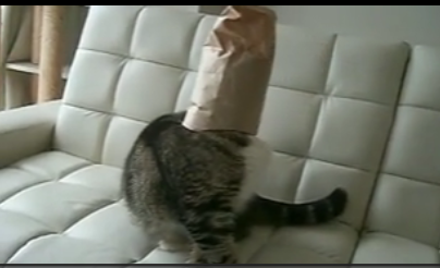 Cat Loves Putting a Bag Over Its Head