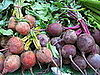 Beets Poll