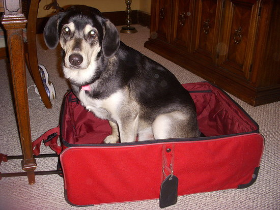 This is old (from March) but he wanted to come to Turks and Caicos with me!