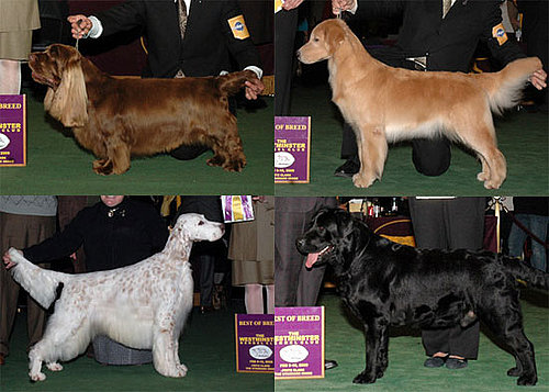 2009 Westminster Winners: Sporting Group