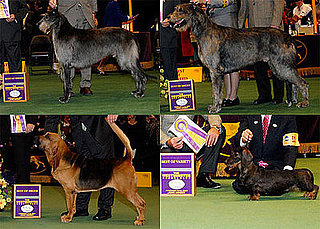2009 Westminster Winners: Hound Group
