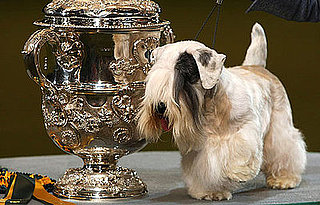 The Scoop: Charmin Wins Crufts!
