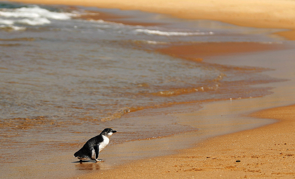 Two Little Penguins: North and South