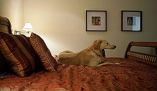 Do Pets' Bedtime Rules and Routines Change on Vacation?