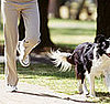 K9 Time: Exercising With Your Pooch
