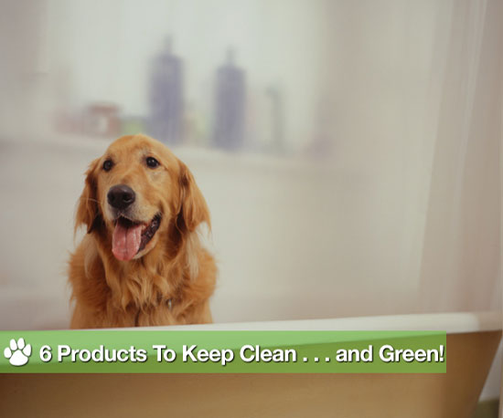 6 Products to Keep Clean . . . and Green!